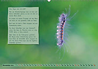 GEOclick Lernkalender: Steckbriefe einheimischer Schmetterlinge (Wandkalender 2019 DIN A2 quer) - Produktdetailbild 11