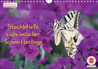 GEOclick Lernkalender: Steckbriefe einheimischer Schmetterlinge (Wandkalender 2019 DIN A4 quer), Klaus Feske