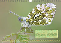 GEOclick Lernkalender: Steckbriefe einheimischer Schmetterlinge (Wandkalender 2019 DIN A4 quer) - Produktdetailbild 2