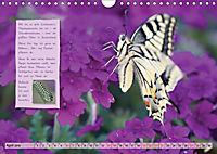 GEOclick Lernkalender: Steckbriefe einheimischer Schmetterlinge (Wandkalender 2019 DIN A4 quer) - Produktdetailbild 4