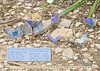 GEOclick Lernkalender: Steckbriefe einheimischer Schmetterlinge (Wandkalender 2019 DIN A4 quer) - Produktdetailbild 3