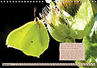 GEOclick Lernkalender: Steckbriefe einheimischer Schmetterlinge (Wandkalender 2019 DIN A4 quer) - Produktdetailbild 1