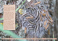 GEOclick Lernkalender: Steckbriefe einheimischer Schmetterlinge (Wandkalender 2019 DIN A4 quer) - Produktdetailbild 6