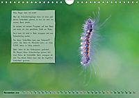 GEOclick Lernkalender: Steckbriefe einheimischer Schmetterlinge (Wandkalender 2019 DIN A4 quer) - Produktdetailbild 11