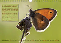 GEOclick Lernkalender: Steckbriefe einheimischer Schmetterlinge (Wandkalender 2019 DIN A4 quer) - Produktdetailbild 9