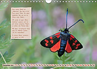 GEOclick Lernkalender: Steckbriefe einheimischer Schmetterlinge (Wandkalender 2019 DIN A4 quer) - Produktdetailbild 12