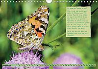 GEOclick Lernkalender: Steckbriefe einheimischer Schmetterlinge (Wandkalender 2019 DIN A4 quer) - Produktdetailbild 8