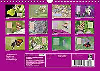 GEOclick Lernkalender: Steckbriefe einheimischer Schmetterlinge (Wandkalender 2019 DIN A4 quer) - Produktdetailbild 13