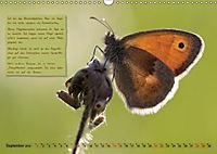 GEOclick Lernkalender: Steckbriefe einheimischer Schmetterlinge (Wandkalender 2019 DIN A3 quer) - Produktdetailbild 9