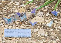GEOclick Lernkalender: Steckbriefe einheimischer Schmetterlinge (Wandkalender 2019 DIN A3 quer) - Produktdetailbild 3