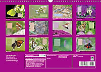 GEOclick Lernkalender: Steckbriefe einheimischer Schmetterlinge (Wandkalender 2019 DIN A3 quer) - Produktdetailbild 13
