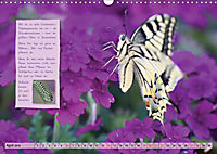 GEOclick Lernkalender: Steckbriefe einheimischer Schmetterlinge (Wandkalender 2019 DIN A3 quer) - Produktdetailbild 4