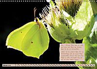 GEOclick Lernkalender: Steckbriefe einheimischer Schmetterlinge (Wandkalender 2019 DIN A3 quer) - Produktdetailbild 1
