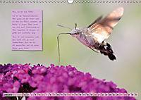 GEOclick Lernkalender: Steckbriefe einheimischer Schmetterlinge (Wandkalender 2019 DIN A3 quer) - Produktdetailbild 7