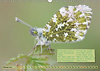 GEOclick Lernkalender: Steckbriefe einheimischer Schmetterlinge (Wandkalender 2019 DIN A3 quer) - Produktdetailbild 2