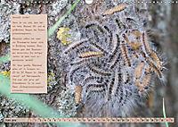 GEOclick Lernkalender: Steckbriefe einheimischer Schmetterlinge (Wandkalender 2019 DIN A3 quer) - Produktdetailbild 6