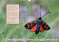 GEOclick Lernkalender: Steckbriefe einheimischer Schmetterlinge (Wandkalender 2019 DIN A3 quer) - Produktdetailbild 12