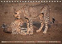 Geparden - Die Schönheiten Afrikas (Tischkalender 2019 DIN A5 quer) - Produktdetailbild 3