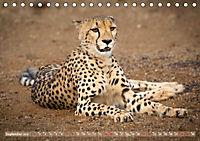 Geparden - Die Schönheiten Afrikas (Tischkalender 2019 DIN A5 quer) - Produktdetailbild 9