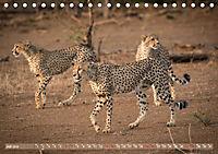 Geparden - Die Schönheiten Afrikas (Tischkalender 2019 DIN A5 quer) - Produktdetailbild 7