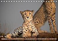 Geparden - Die Schönheiten Afrikas (Tischkalender 2019 DIN A5 quer) - Produktdetailbild 2
