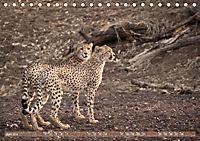 Geparden - Die Schönheiten Afrikas (Tischkalender 2019 DIN A5 quer) - Produktdetailbild 6