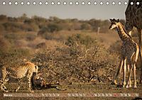 Geparden - Die Schönheiten Afrikas (Tischkalender 2019 DIN A5 quer) - Produktdetailbild 5