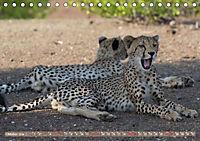 Geparden - Die Schönheiten Afrikas (Tischkalender 2019 DIN A5 quer) - Produktdetailbild 10
