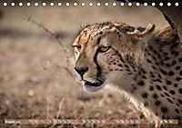 Geparden - Die Schönheiten Afrikas (Tischkalender 2019 DIN A5 quer) - Produktdetailbild 8