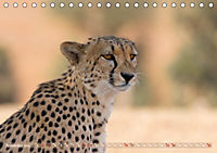 Geparden - Die Schönheiten Afrikas (Tischkalender 2019 DIN A5 quer) - Produktdetailbild 11