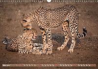 Geparden - Die Schönheiten Afrikas (Wandkalender 2019 DIN A3 quer) - Produktdetailbild 3