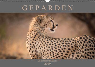 Geparden - Die Schönheiten Afrikas (Wandkalender 2019 DIN A3 quer), Markus Pavlowsky