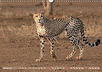 Geparden - Die Schönheiten Afrikas (Wandkalender 2019 DIN A3 quer) - Produktdetailbild 1