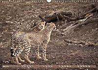 Geparden - Die Schönheiten Afrikas (Wandkalender 2019 DIN A3 quer) - Produktdetailbild 6