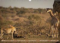 Geparden - Die Schönheiten Afrikas (Wandkalender 2019 DIN A3 quer) - Produktdetailbild 5