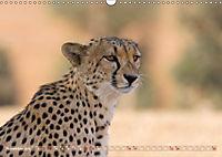 Geparden - Die Schönheiten Afrikas (Wandkalender 2019 DIN A3 quer) - Produktdetailbild 11