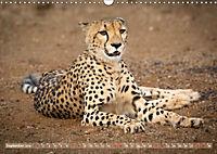 Geparden - Die Schönheiten Afrikas (Wandkalender 2019 DIN A3 quer) - Produktdetailbild 9