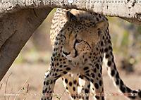 Geparden - Die Schönheiten Afrikas (Wandkalender 2019 DIN A3 quer) - Produktdetailbild 12