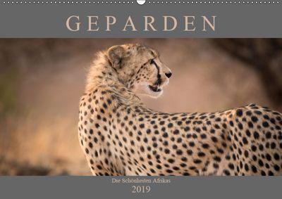 Geparden - Die Schönheiten Afrikas (Wandkalender 2019 DIN A2 quer), Markus Pavlowsky
