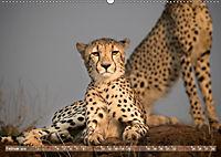 Geparden - Die Schönheiten Afrikas (Wandkalender 2019 DIN A2 quer) - Produktdetailbild 2
