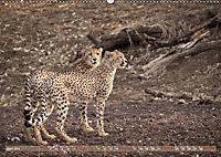 Geparden - Die Schönheiten Afrikas (Wandkalender 2019 DIN A2 quer) - Produktdetailbild 6