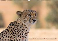 Geparden - Die Schönheiten Afrikas (Wandkalender 2019 DIN A2 quer) - Produktdetailbild 11