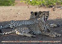 Geparden - Die Schönheiten Afrikas (Wandkalender 2019 DIN A2 quer) - Produktdetailbild 10