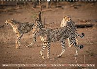 Geparden - Die Schönheiten Afrikas (Wandkalender 2019 DIN A2 quer) - Produktdetailbild 7