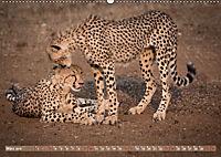 Geparden - Die Schönheiten Afrikas (Wandkalender 2019 DIN A2 quer) - Produktdetailbild 3