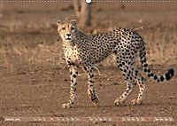 Geparden - Die Schönheiten Afrikas (Wandkalender 2019 DIN A2 quer) - Produktdetailbild 1