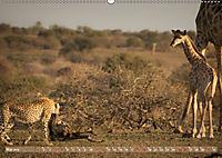 Geparden - Die Schönheiten Afrikas (Wandkalender 2019 DIN A2 quer) - Produktdetailbild 5
