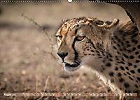 Geparden - Die Schönheiten Afrikas (Wandkalender 2019 DIN A2 quer) - Produktdetailbild 8