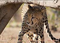 Geparden - Die Schönheiten Afrikas (Wandkalender 2019 DIN A2 quer) - Produktdetailbild 12