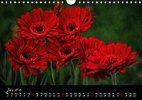 Gerberas Floral Impressions (Wall Calendar 2019 DIN A4 Landscape) - Produktdetailbild 7
